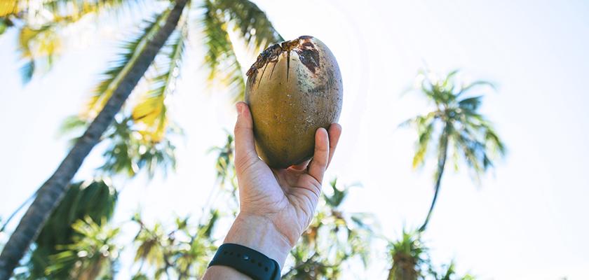 Cocosnoot